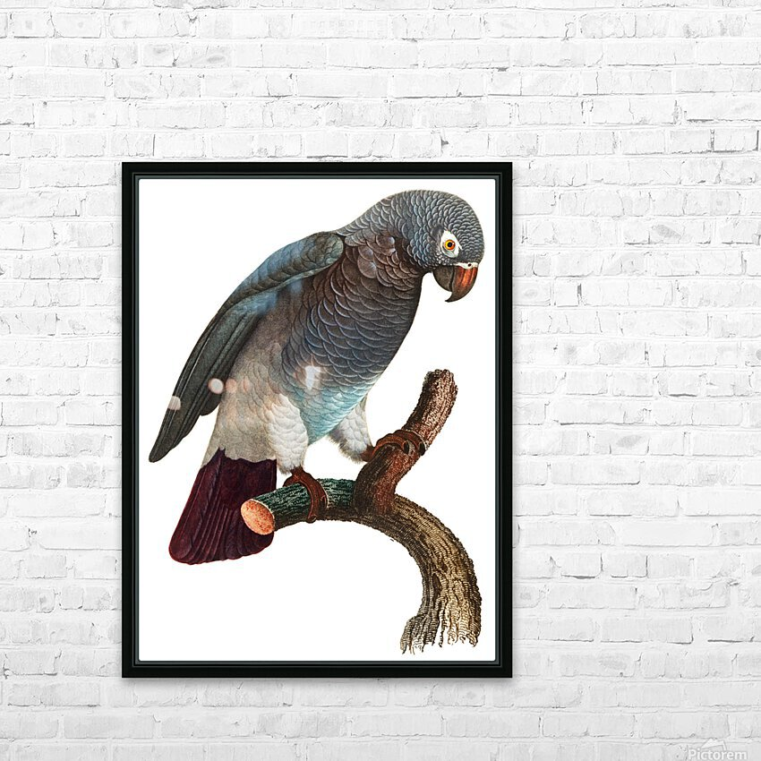 Macaw - Birds - Paradise - Tropical- Art Print - Wall Art - Parrot HD Sublimation Metal print with Decorating Float Frame (BOX)
