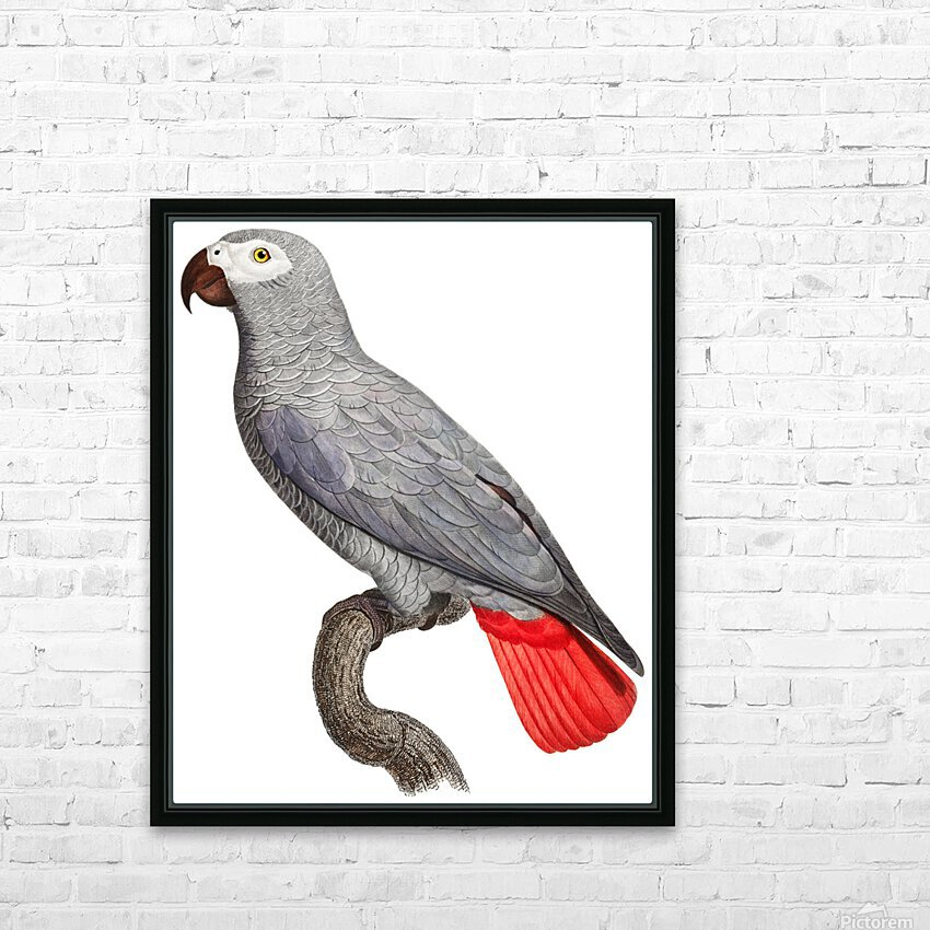 Parrot Print Art Poster with Parrot Parrot Wall Art for Bird Lovers HD Sublimation Metal print with Decorating Float Frame (BOX)