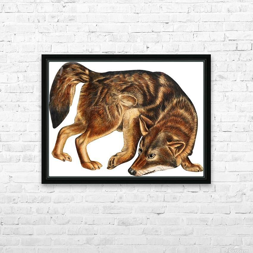 Fox Print | British Wildlife Art | A3 A4 A5 | Fox Lover Gift | Fox Illustration | Fox Painting | Fox Nursery Wall Art | British Animal Print HD Sublimation Metal print with Decorating Float Frame (BOX)
