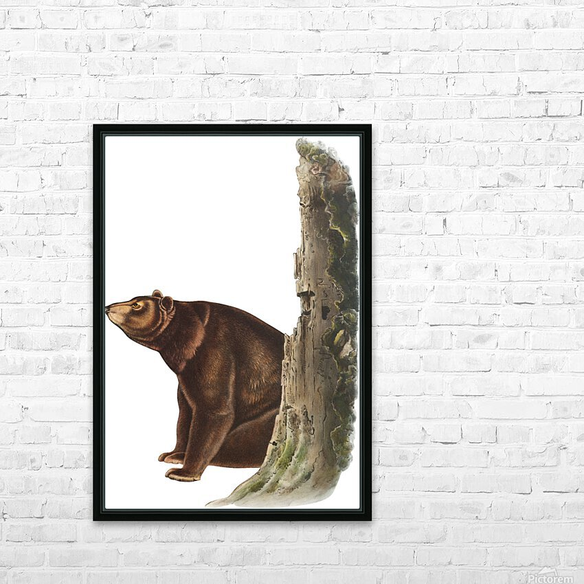 Bear Print HD Sublimation Metal print with Decorating Float Frame (BOX)