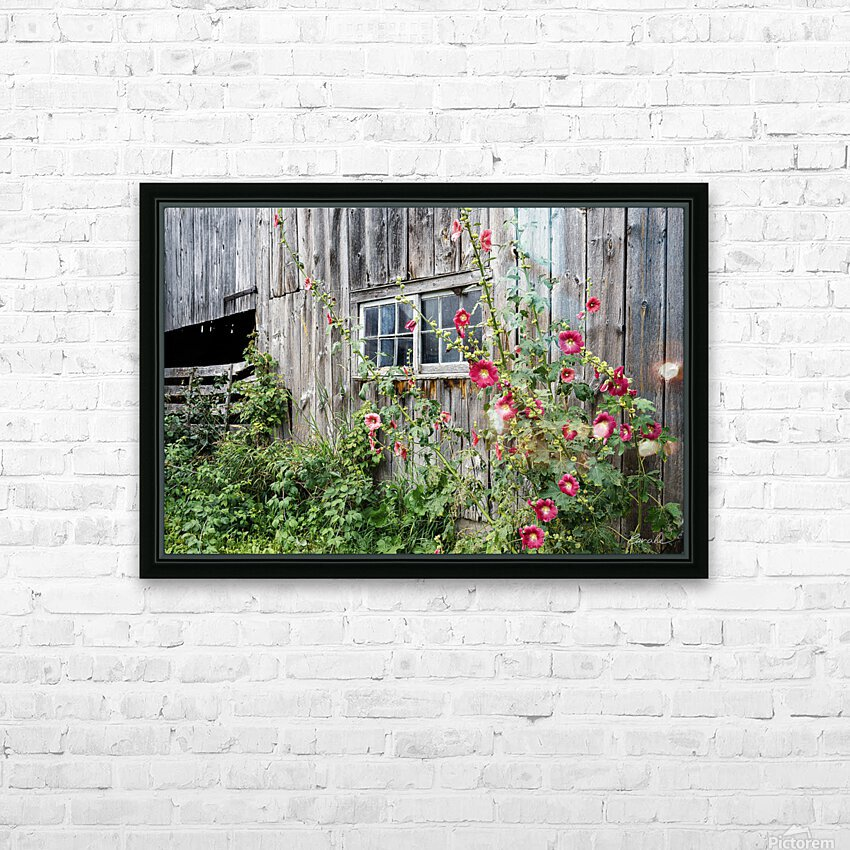 Roses tremieres embellies par une vieille grange - Hollyhocks embellished by an old barn HD Sublimation Metal print with Decorating Float Frame (BOX)