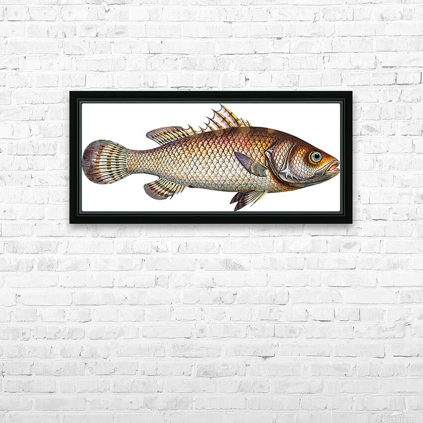 Vintage Fish Wall Art Prints  HD Sublimation Metal print with Decorating Float Frame (BOX)