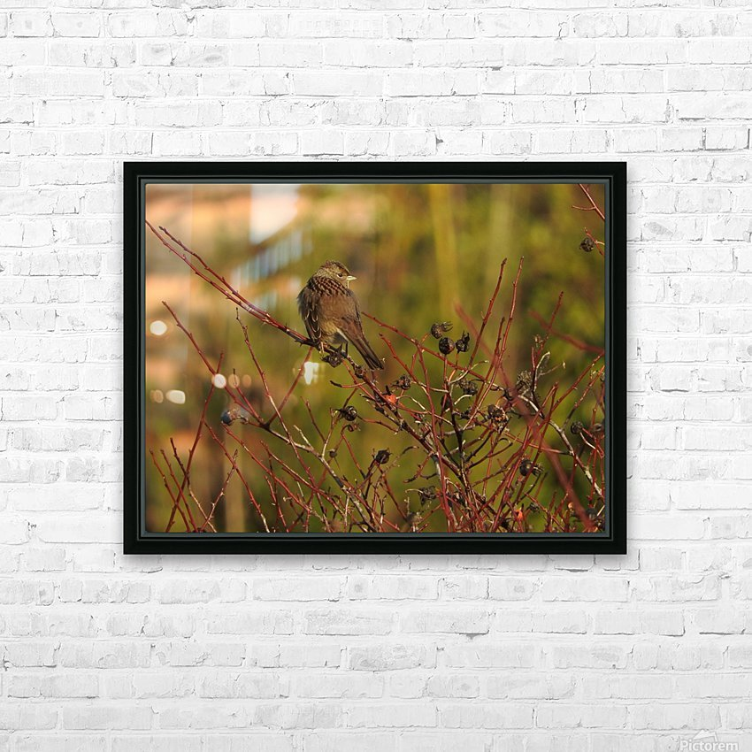 Sparrow on Wild Rose  HD Sublimation Metal print with Decorating Float Frame (BOX)