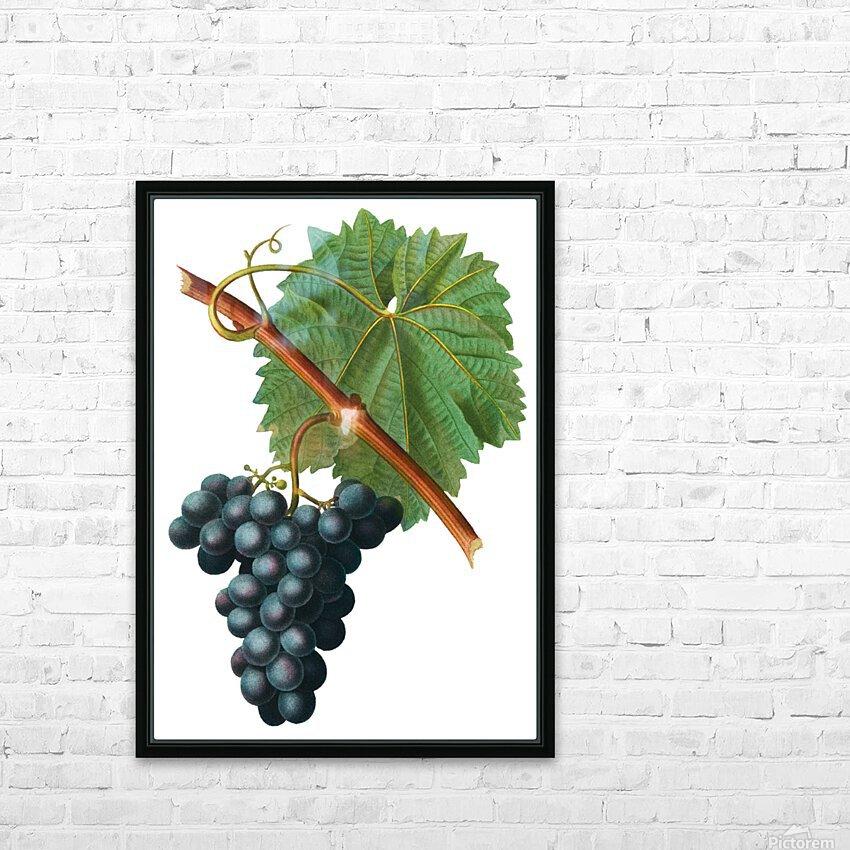 Grape Spanna Antique Art Kitchen Art Grapes Vintage Grapes Pic Grape Vine Grape Leaves Winery Spanna Grapes Wine Blued 02Element 3 HD Sublimation Metal print with Decorating Float Frame (BOX)