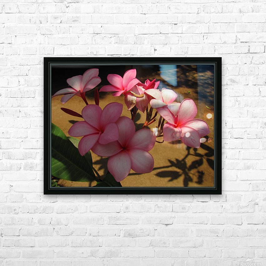 Pink Plumeria 2 HD Sublimation Metal print with Decorating Float Frame (BOX)