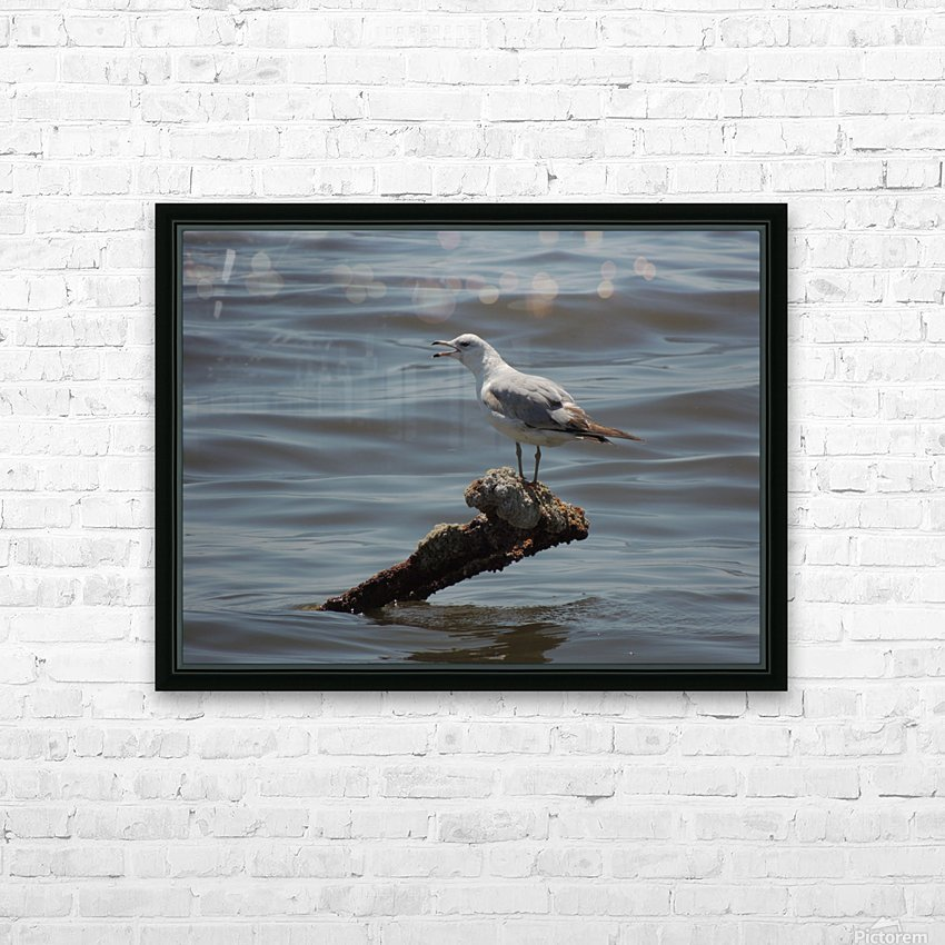 Ring-billed Gull HD Sublimation Metal print with Decorating Float Frame (BOX)