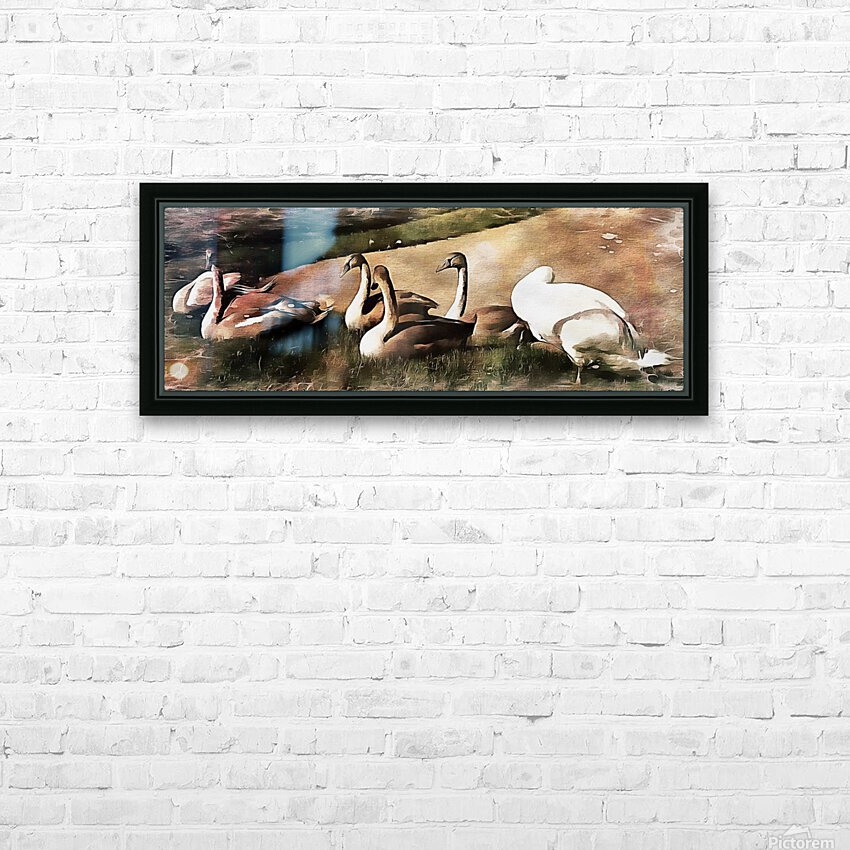 Swan Family HD Sublimation Metal print with Decorating Float Frame (BOX)