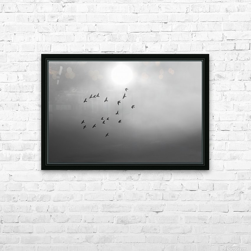 Doves daily flight routine HD Sublimation Metal print with Decorating Float Frame (BOX)
