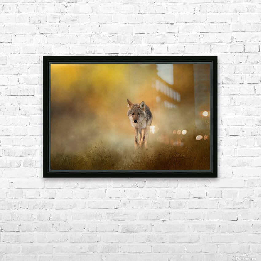 Strolling Coyote HD Sublimation Metal print with Decorating Float Frame (BOX)