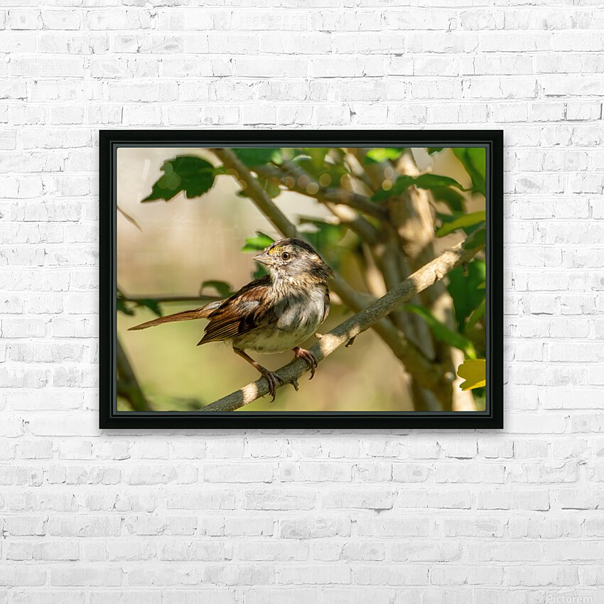 Sparrow HD Sublimation Metal print with Decorating Float Frame (BOX)