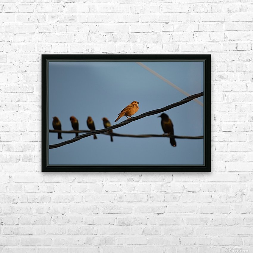 Birds on the Wires HD Sublimation Metal print with Decorating Float Frame (BOX)