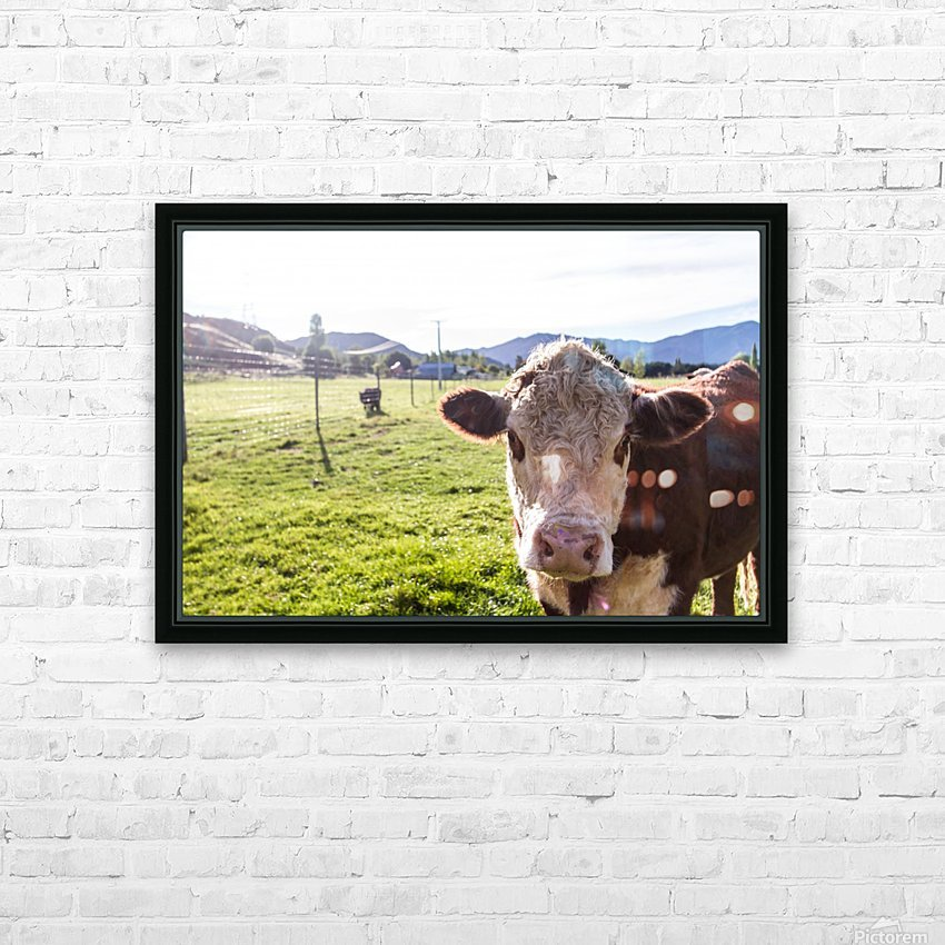 Afternoon Moos HD Sublimation Metal print with Decorating Float Frame (BOX)