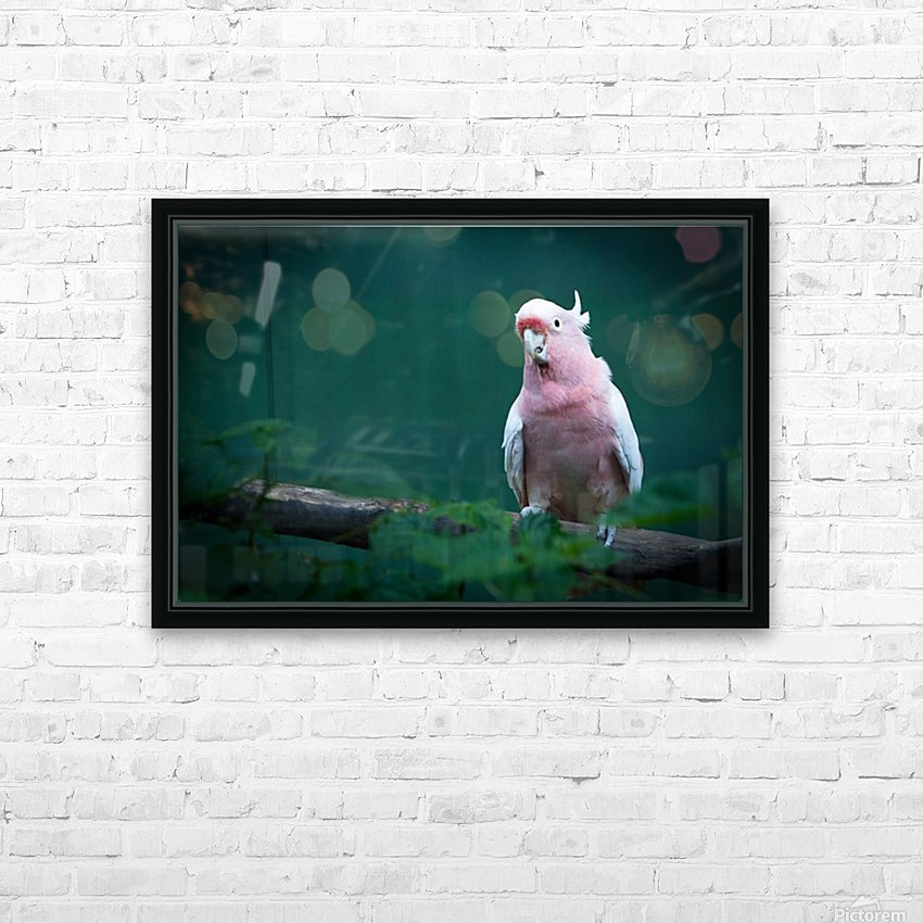 Nature and Birds 14 HD Sublimation Metal print with Decorating Float Frame (BOX)
