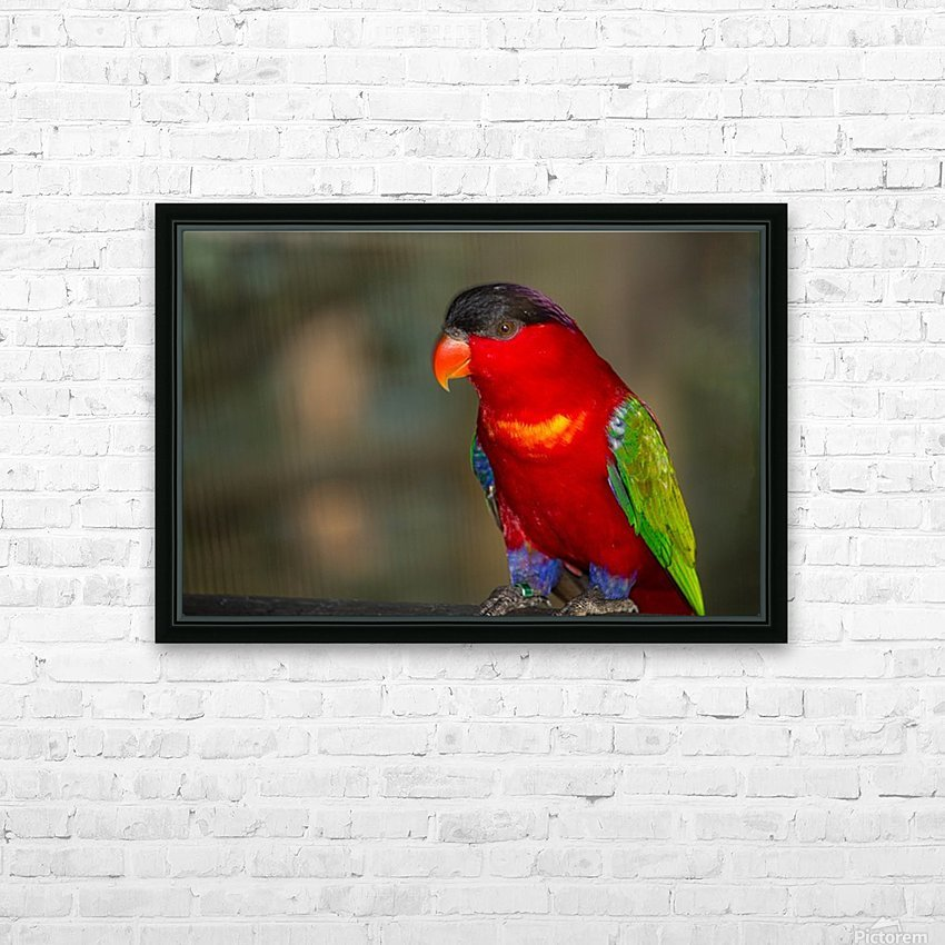Nature and Birds  11 HD Sublimation Metal print with Decorating Float Frame (BOX)
