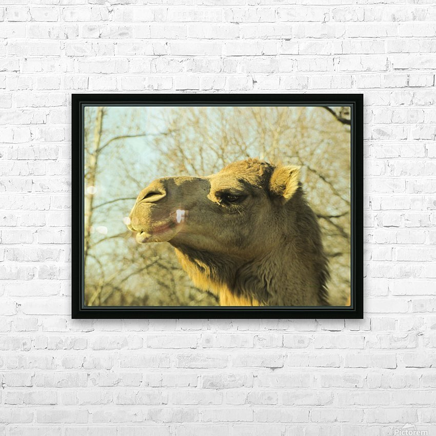 Aribian Camel HD Sublimation Metal print with Decorating Float Frame (BOX)