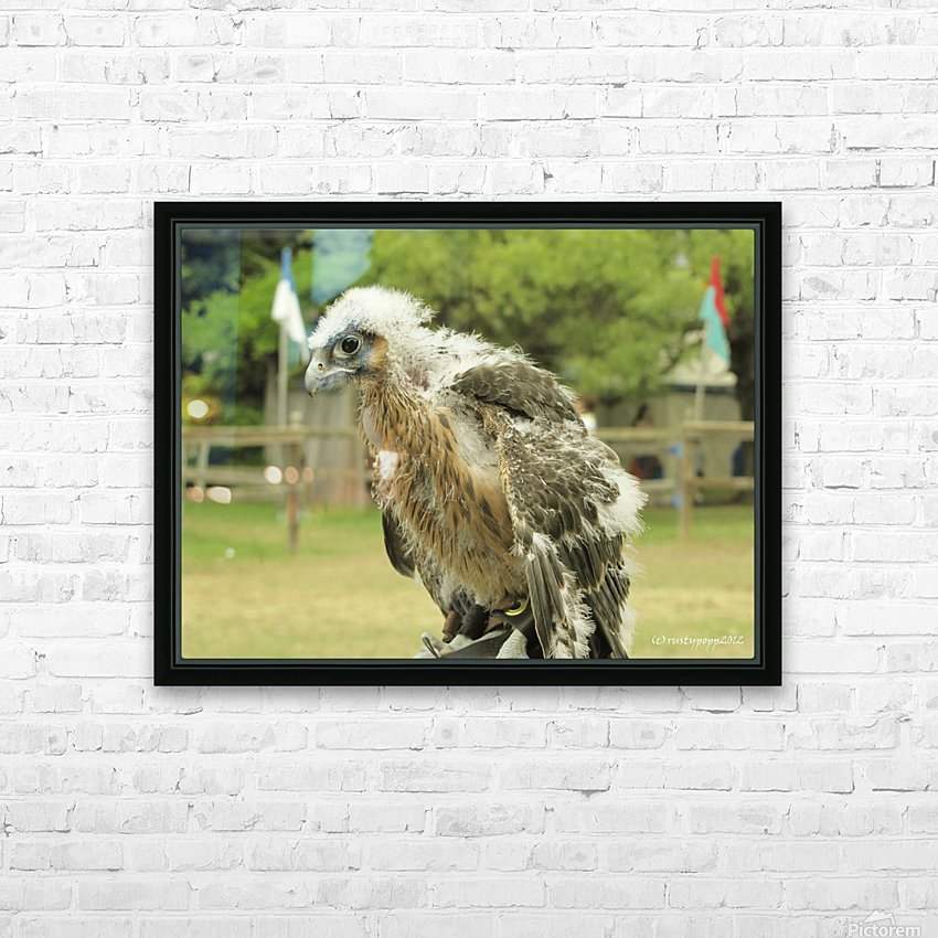 baby hawk1 HD Sublimation Metal print with Decorating Float Frame (BOX)