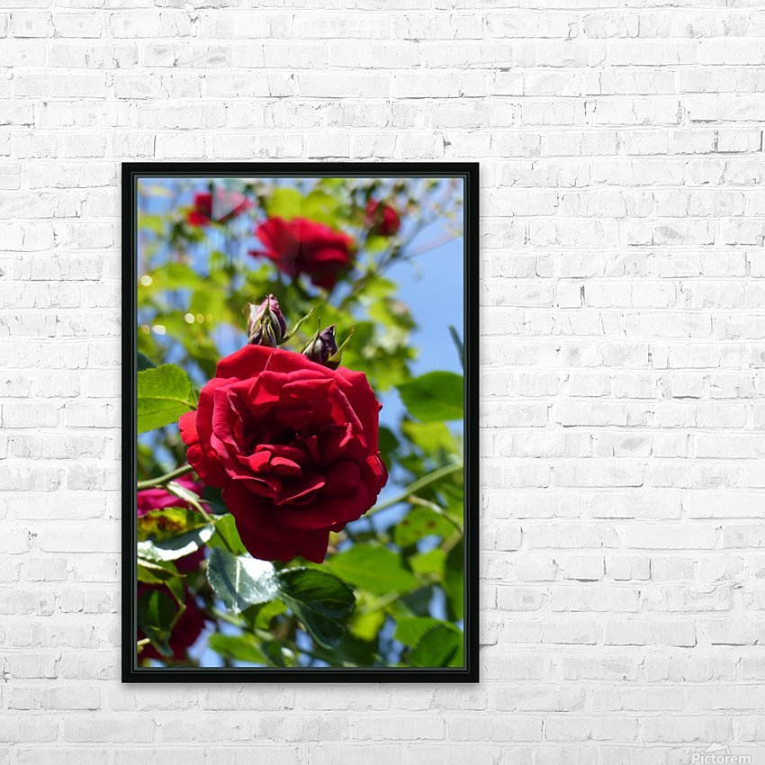 Red, White and Blue HD Sublimation Metal print with Decorating Float Frame (BOX)