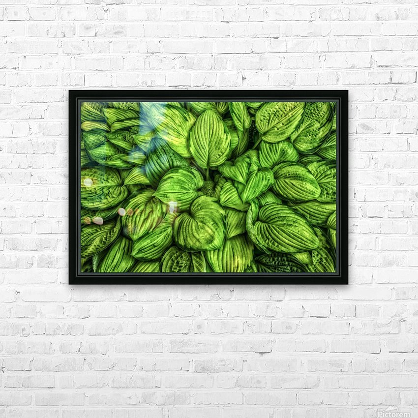 Hosta Glow HD Sublimation Metal print with Decorating Float Frame (BOX)