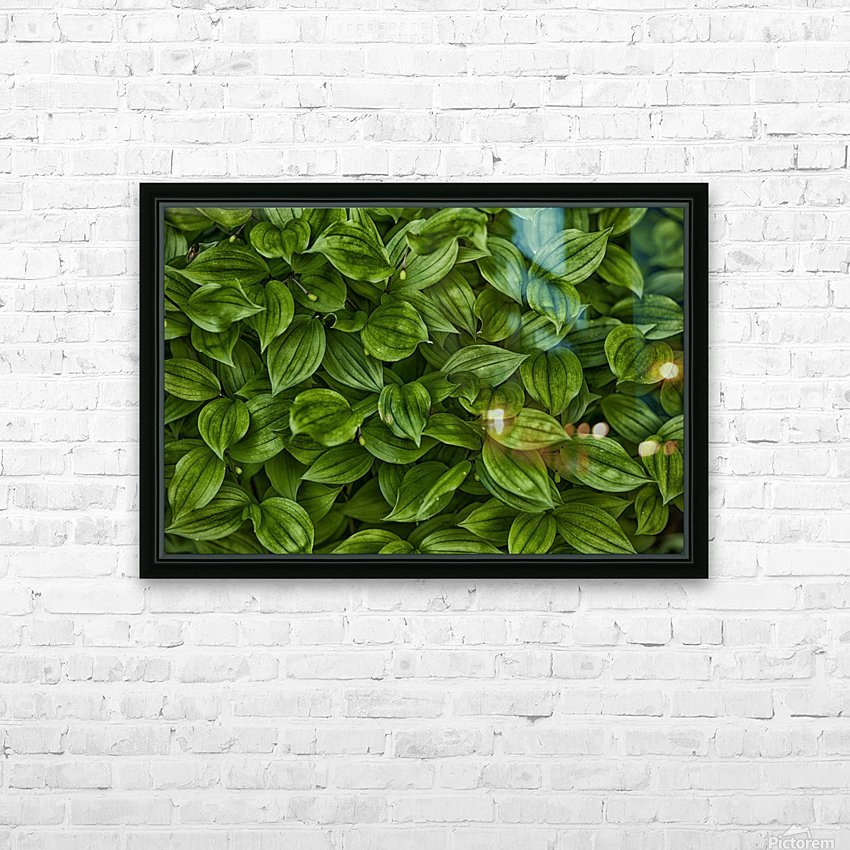 Hosta HD Sublimation Metal print with Decorating Float Frame (BOX)