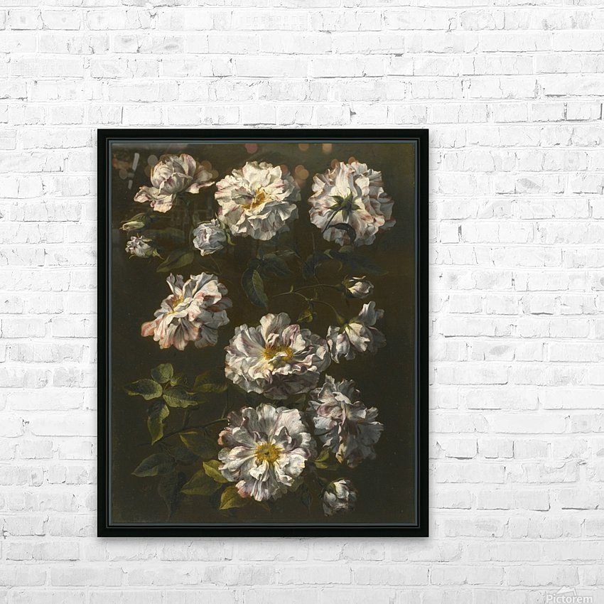 A study of striped white gallica roses HD Sublimation Metal print with Decorating Float Frame (BOX)