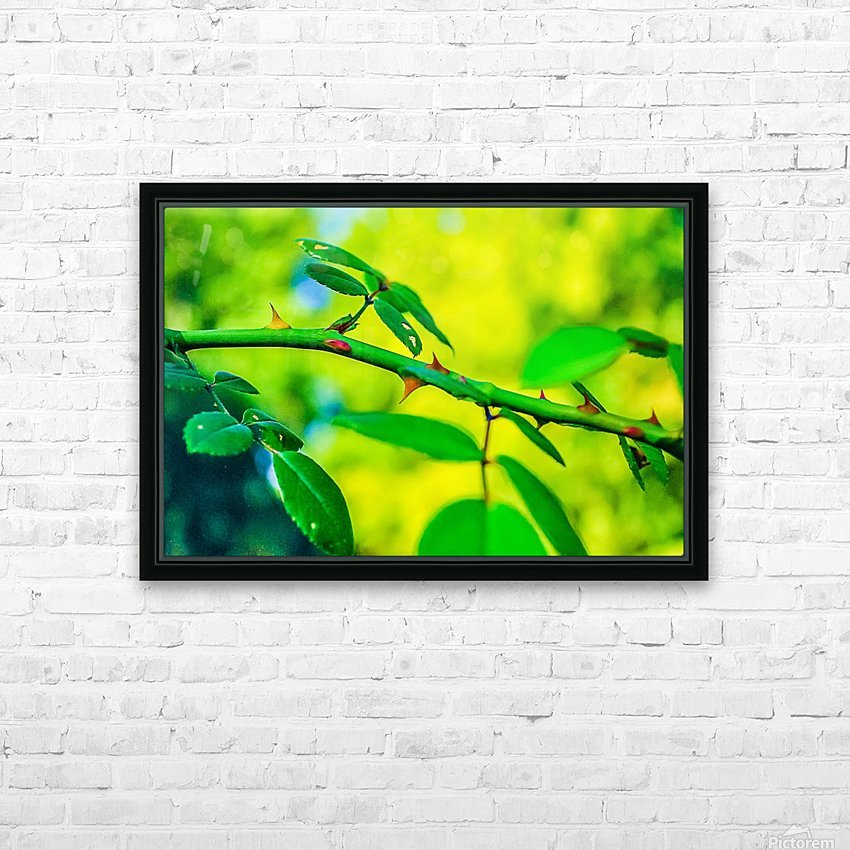 MHPBartlettArboretum 10 HD Sublimation Metal print with Decorating Float Frame (BOX)
