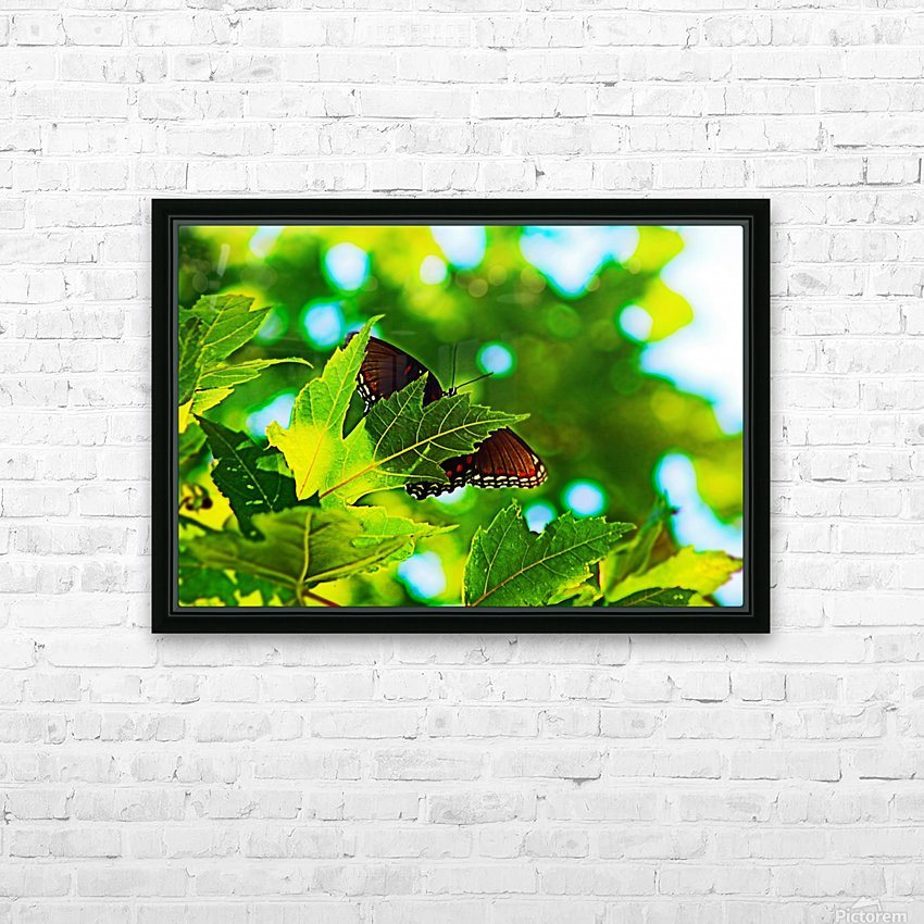 Resting on A Maple Leaf HD Sublimation Metal print with Decorating Float Frame (BOX)