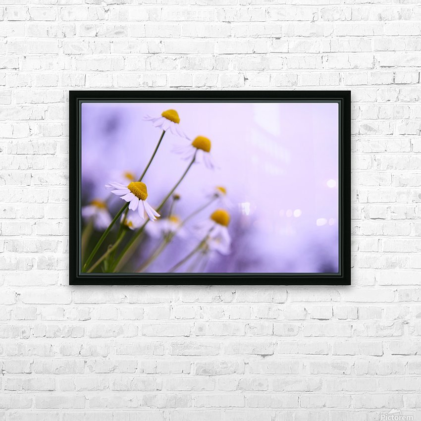 Chamomile in spring HD Sublimation Metal print with Decorating Float Frame (BOX)