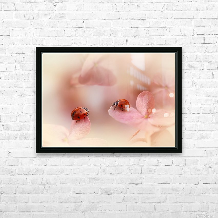 Ladybirds on pink hydrangea. HD Sublimation Metal print with Decorating Float Frame (BOX)