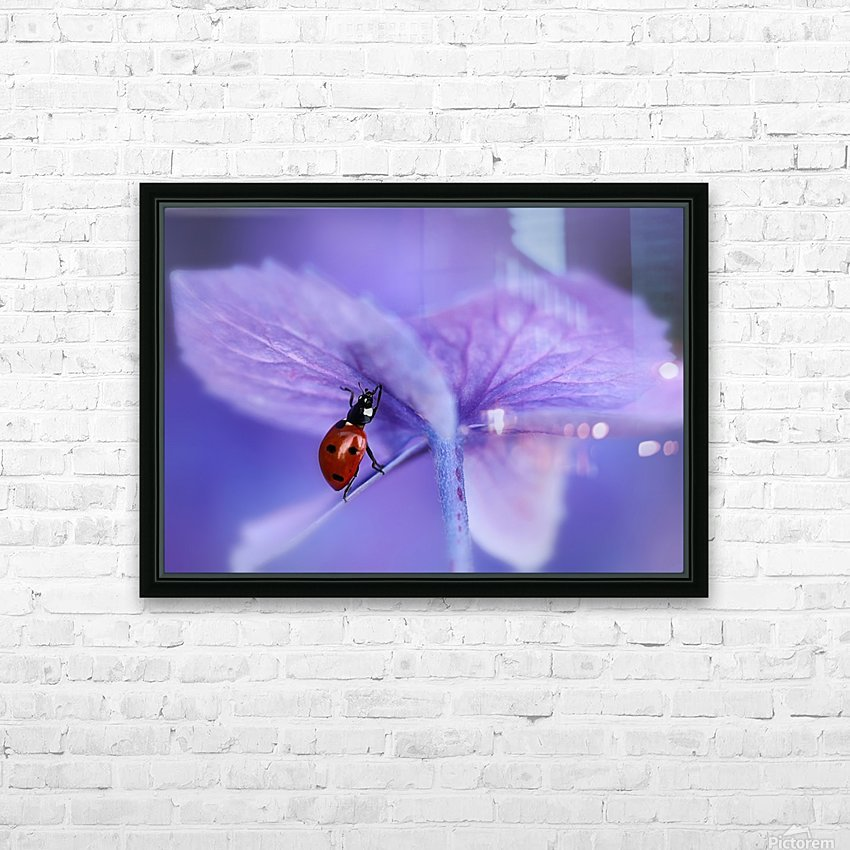 Ladybird on purple hydrangea HD Sublimation Metal print with Decorating Float Frame (BOX)