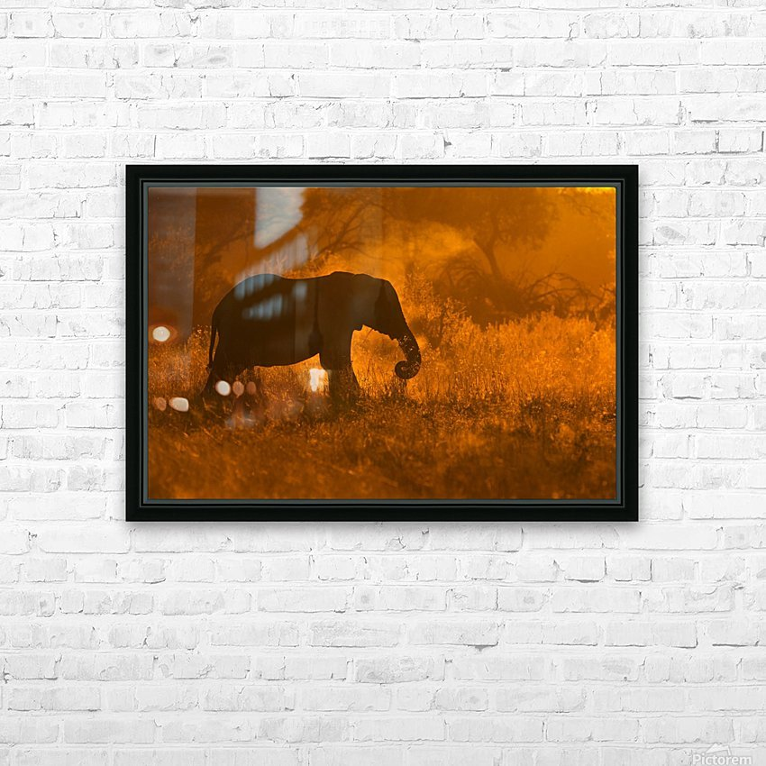 Golden Elephant in Savute HD Sublimation Metal print with Decorating Float Frame (BOX)