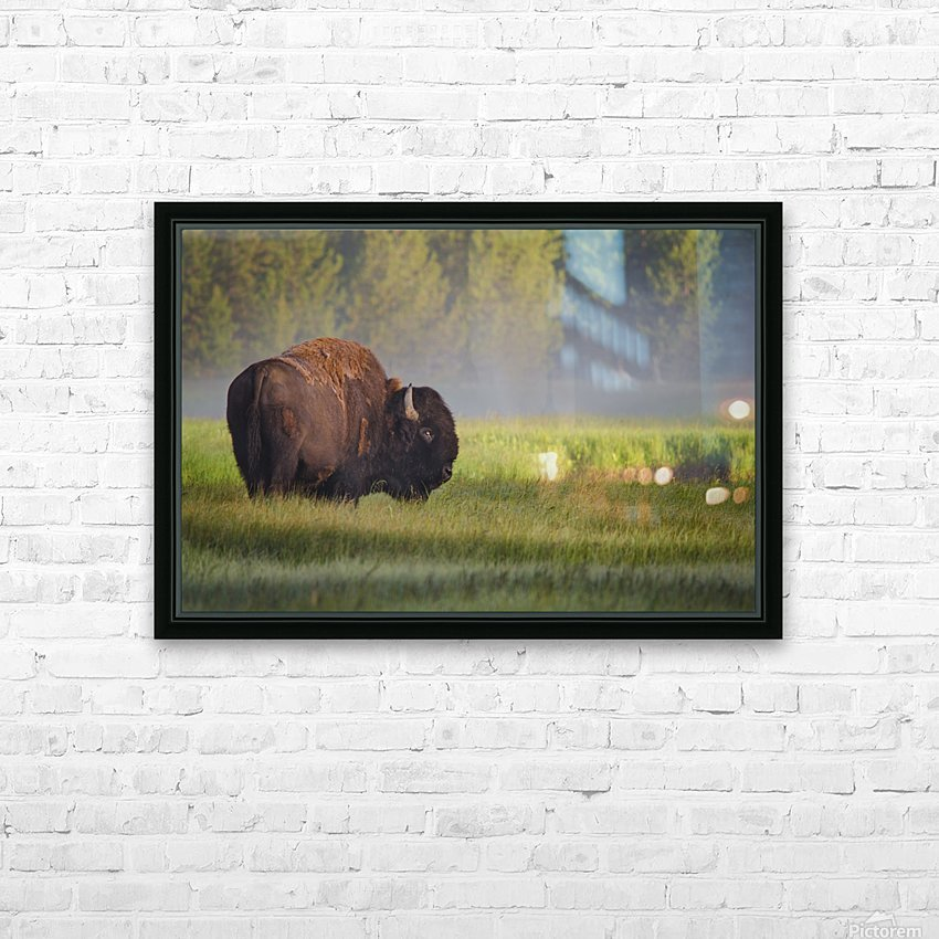 Bison in Morning Light HD Sublimation Metal print with Decorating Float Frame (BOX)