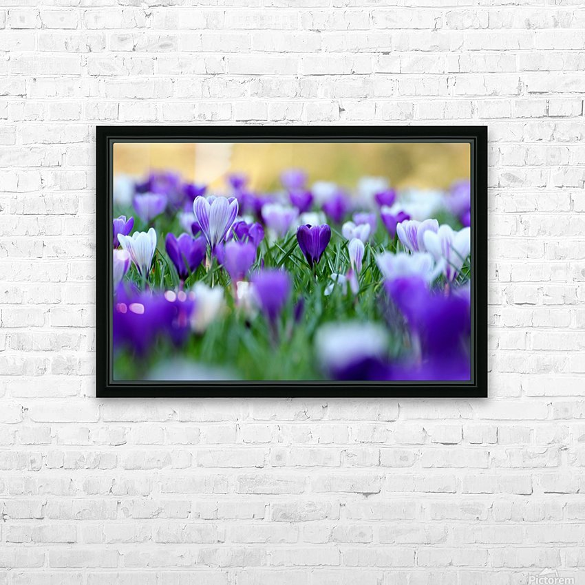 Amongst the crocuses HD Sublimation Metal print with Decorating Float Frame (BOX)