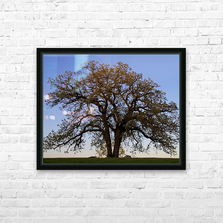 The Wishing Tree HD Sublimation Metal print with Decorating Float Frame (BOX)