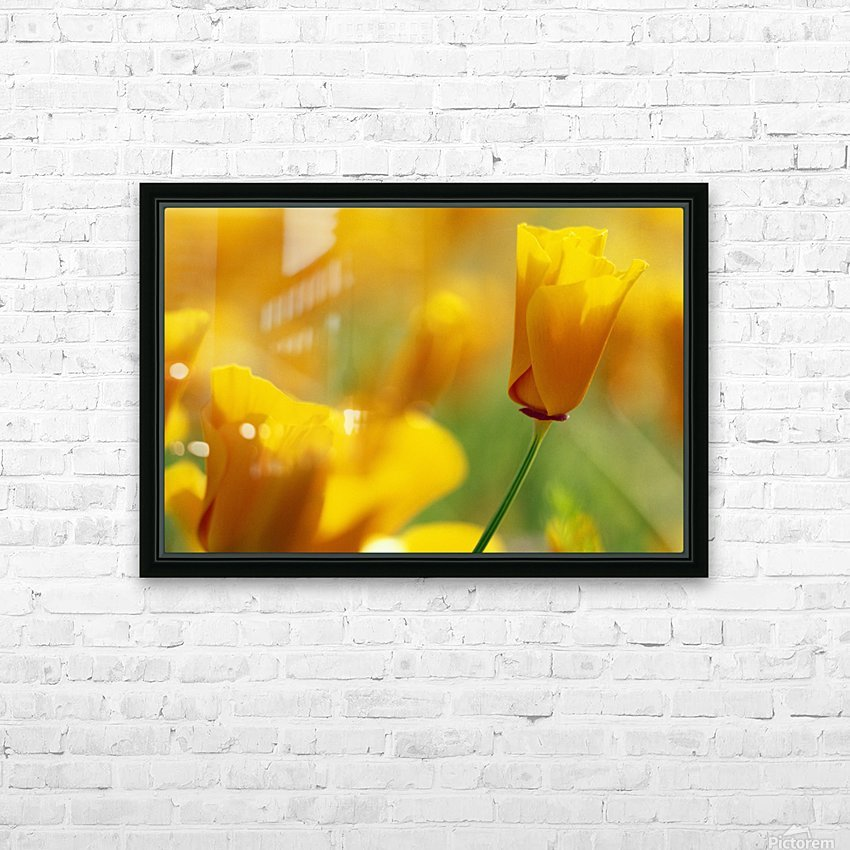 Yellow Poppy HD Sublimation Metal print with Decorating Float Frame (BOX)