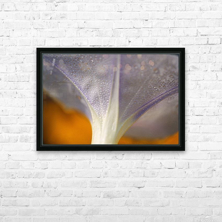 Underside Of A Flower Blossom With Dew HD Sublimation Metal print with Decorating Float Frame (BOX)