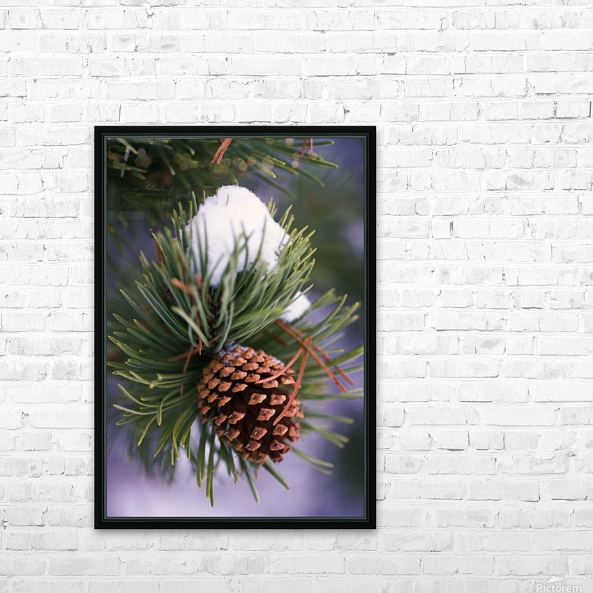 Early Snow On Pine Tree Branch With Pinecone HD Sublimation Metal print with Decorating Float Frame (BOX)