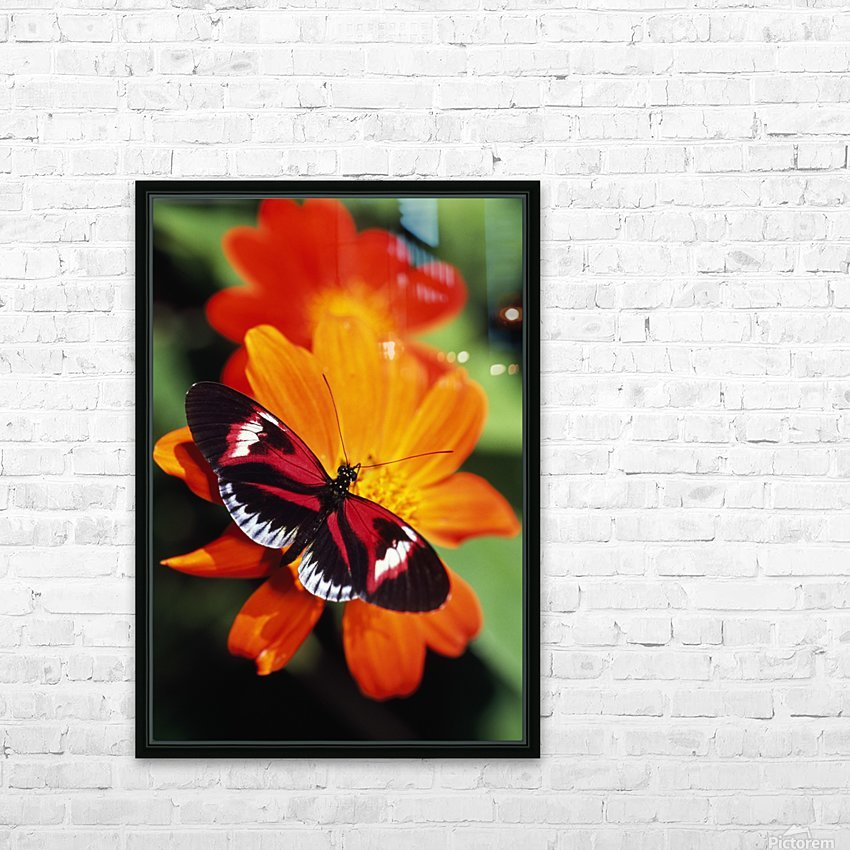 Butterfly On Flower HD Sublimation Metal print with Decorating Float Frame (BOX)
