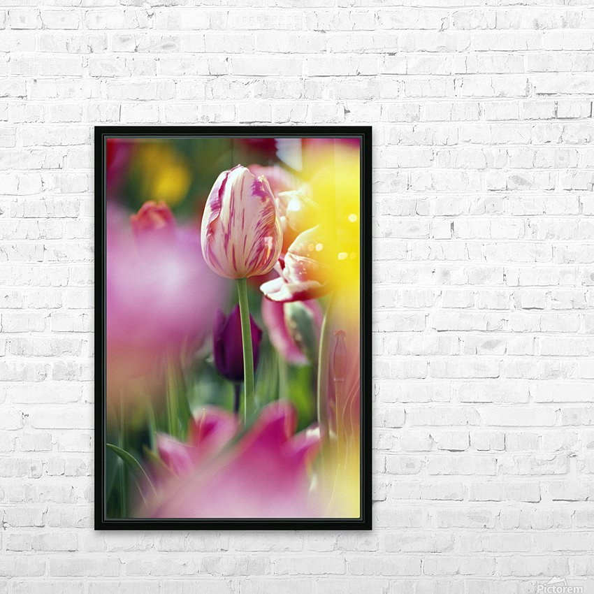 Tulip Flower HD Sublimation Metal print with Decorating Float Frame (BOX)