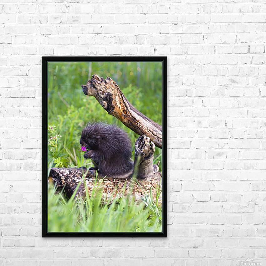 Porcupine Baby Eating Flower HD Sublimation Metal print with Decorating Float Frame (BOX)