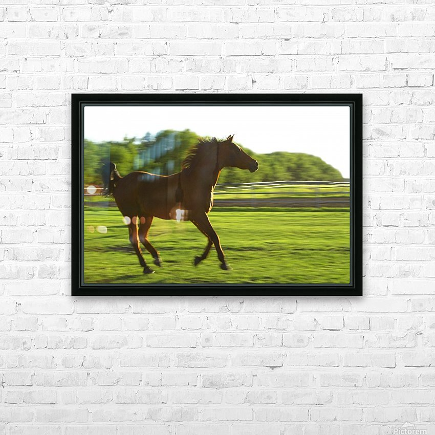 Horse Galloping HD Sublimation Metal print with Decorating Float Frame (BOX)
