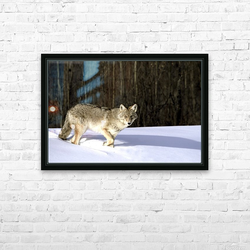 Coyote In Winter HD Sublimation Metal print with Decorating Float Frame (BOX)