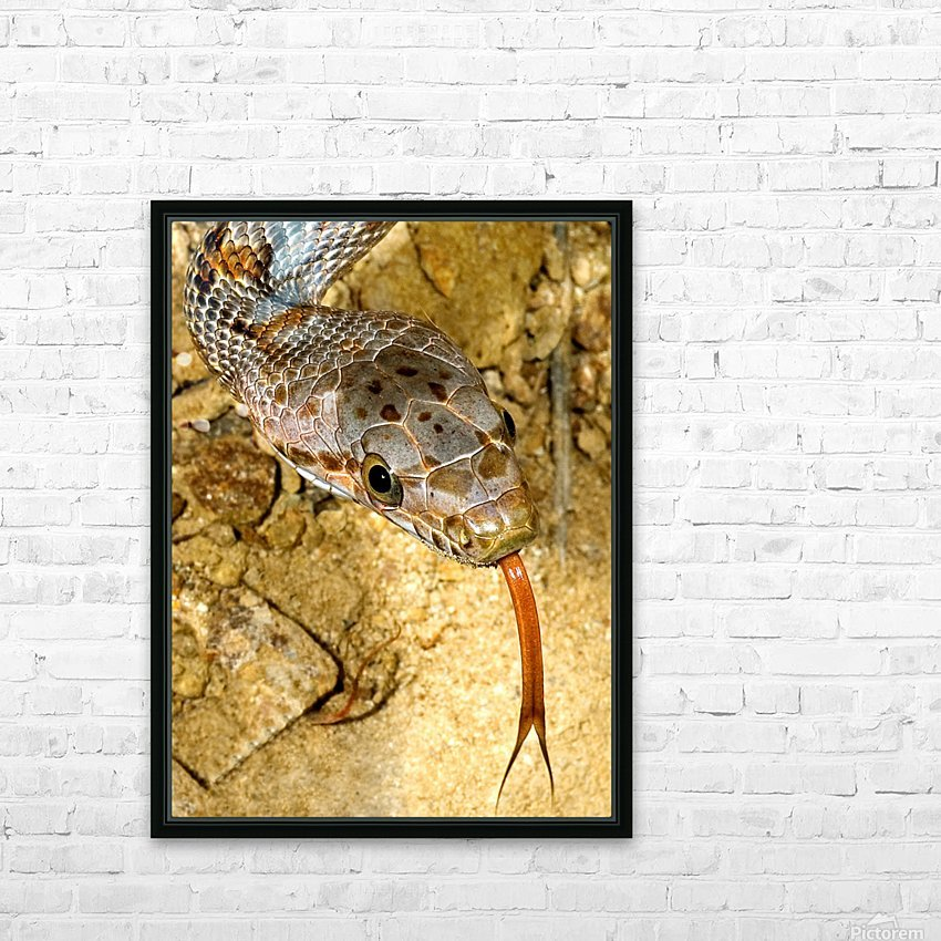 Baird's Rat Snake Tongue Flick HD Sublimation Metal print with Decorating Float Frame (BOX)