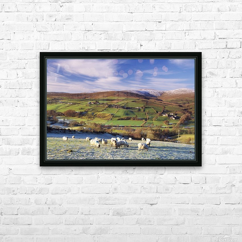 Sperrin Mountains, County Tyrone, Ireland, Sheep HD Sublimation Metal print with Decorating Float Frame (BOX)