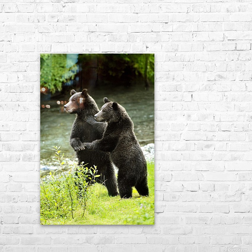 Two Grizzly Bears HD Sublimation Metal print with Decorating Float Frame (BOX)