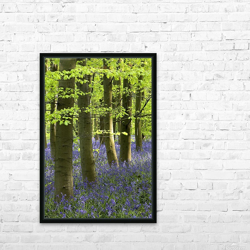Bluebells In The Woods, Nottinghamshire, England HD Sublimation Metal print with Decorating Float Frame (BOX)