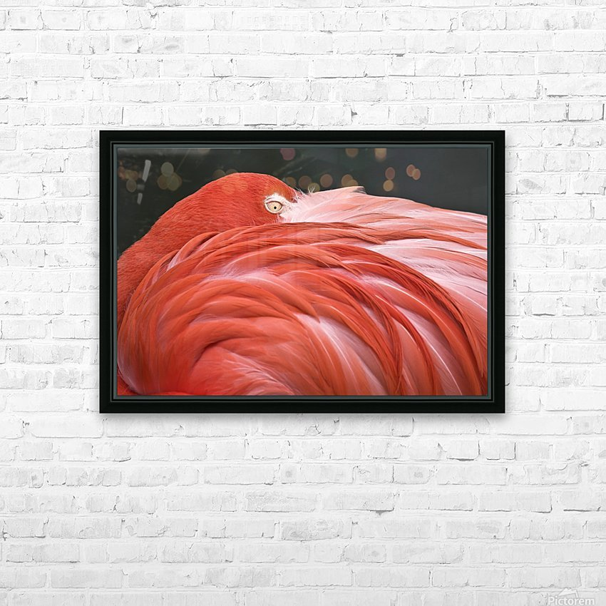 Close Up Of A Flamingo Resting Its Head On Its Back HD Sublimation Metal print with Decorating Float Frame (BOX)