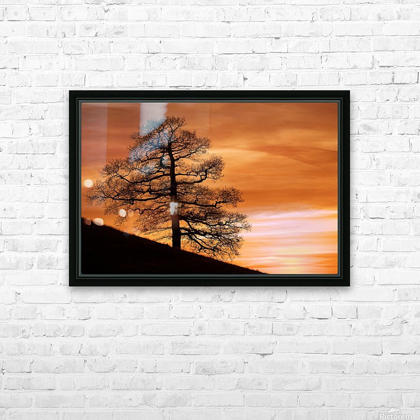 Tree Against A Sunset Sky, Nottinghamshire, England HD Sublimation Metal print with Decorating Float Frame (BOX)