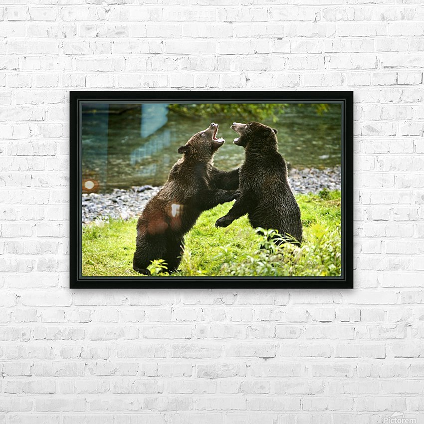 Two Grizzly Bears Fighting HD Sublimation Metal print with Decorating Float Frame (BOX)