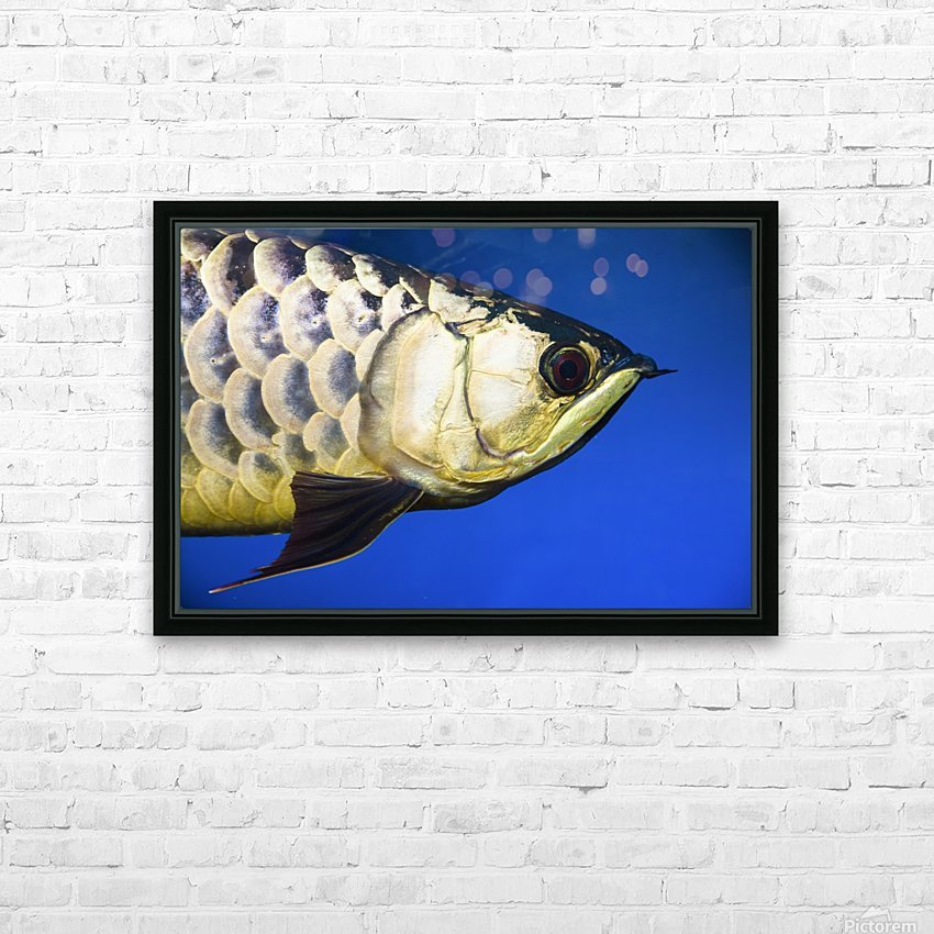 Closeup Of A Fish HD Sublimation Metal print with Decorating Float Frame (BOX)