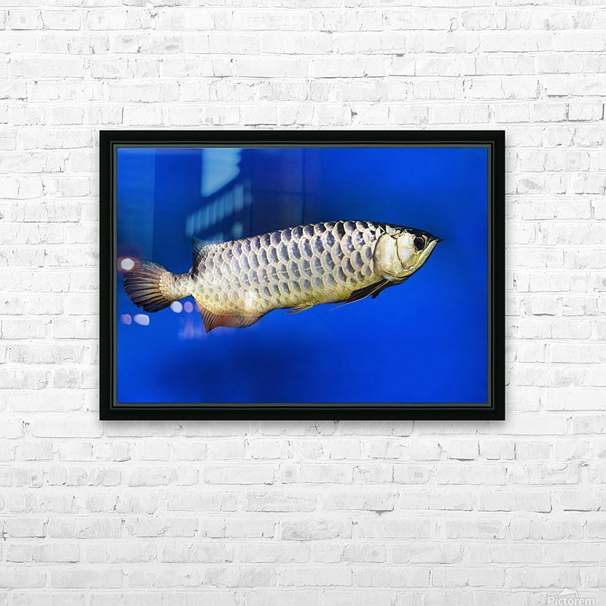 Fish HD Sublimation Metal print with Decorating Float Frame (BOX)